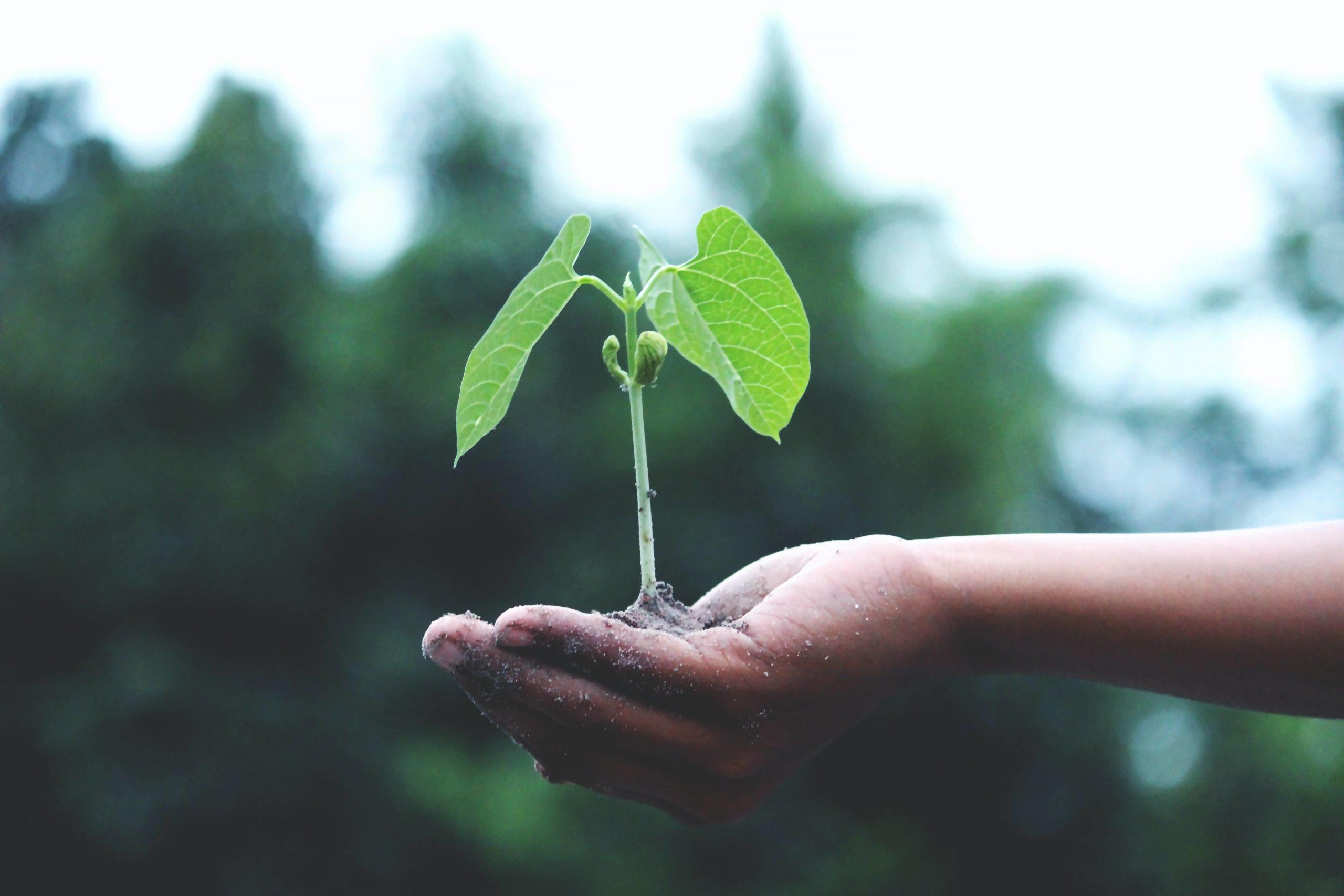 Main avec une plante dedans